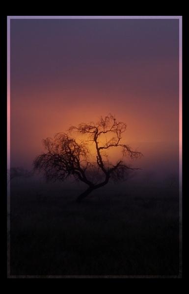 Misty Morn by Msalicat