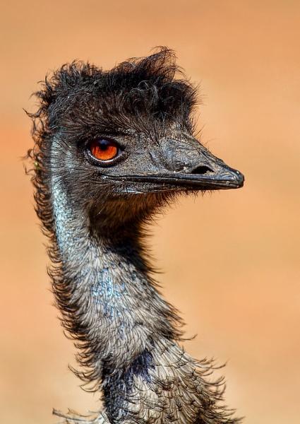 emu by dentex