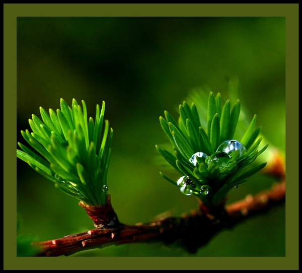 Nestling waterdrops by Heffo1