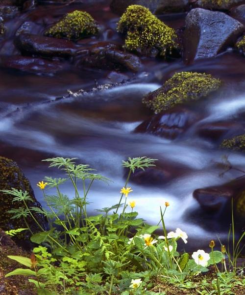 Glenariff Stream, N Ireland by ANNIEKERR