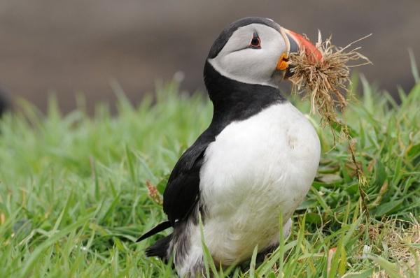 Nesting time by StuartDavie