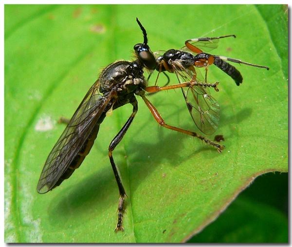 fly vs fly by bunbeam