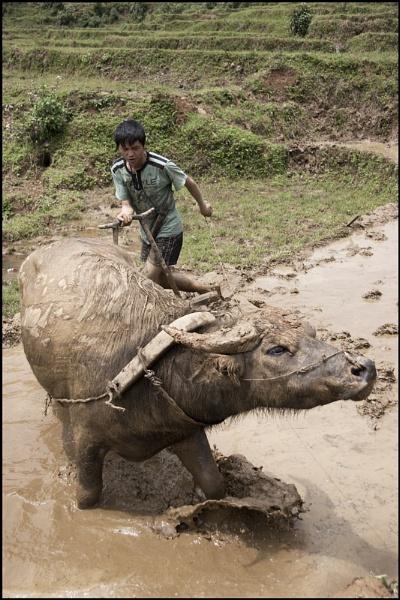 Mud Raker by yemtrav