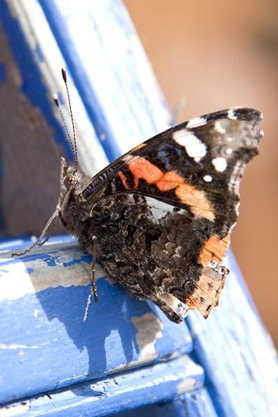 butterfly by nigell