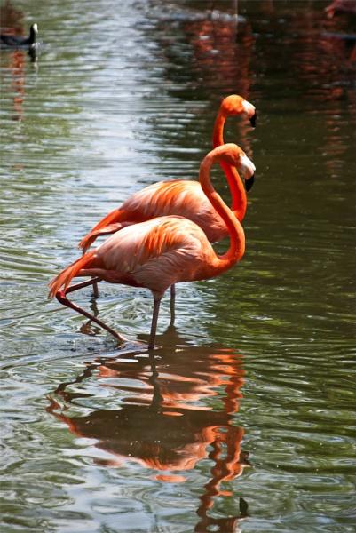 Flamingo\'s. by gaelldew
