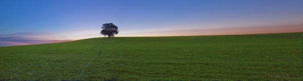 Alvecote trees by ensign