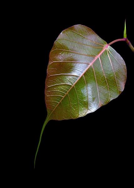 Nature\'s Beauty by samarmishra