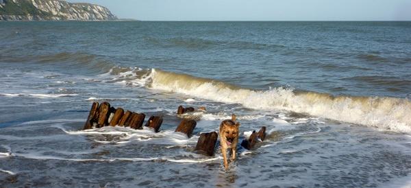 Ocean Run by seaviewlou