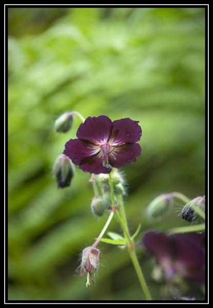 Unknown flower by jasonrwl