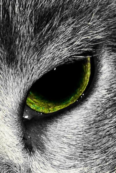 Beast Eye by DitoInacio