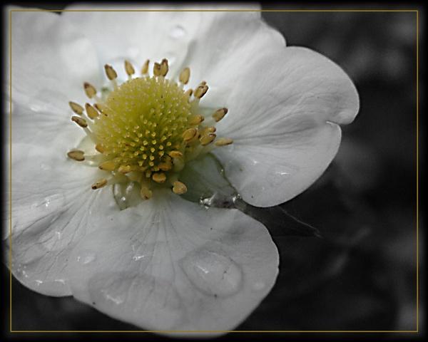 The sunday Flower by dan3008
