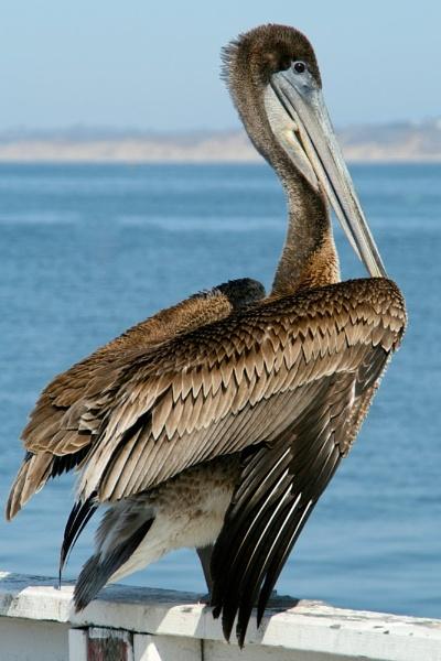 Big bird by Gary_Dolby