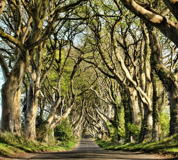 Bregagh Road, Co Antrim by ANNIEKERR