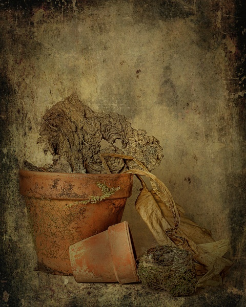 Monday Night Challenge 23rd May Still Life by digitalphotons