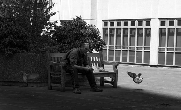 Pigeon Man by nickthompson