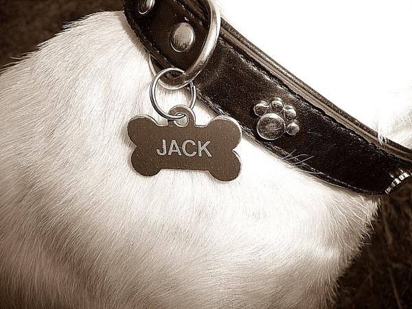 Jack x by mushroomgirl