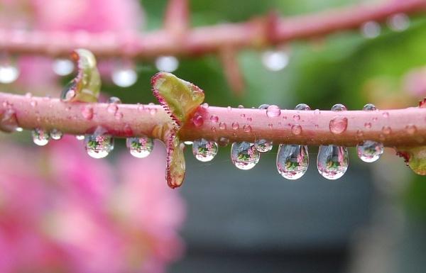 raindrops 2 by CherryMartin