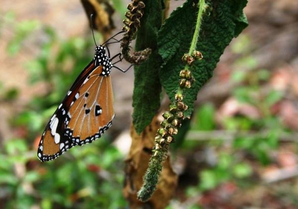 Butterfly by pingreek