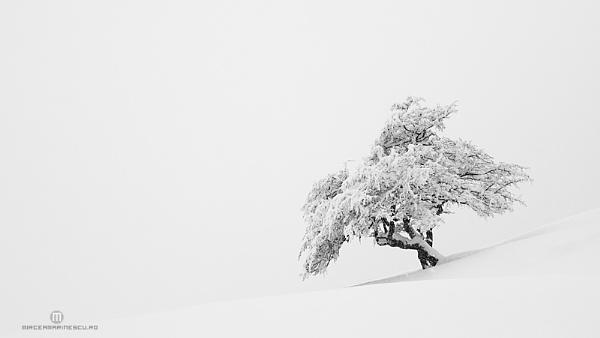The Optimist by Mircea_Marinescu