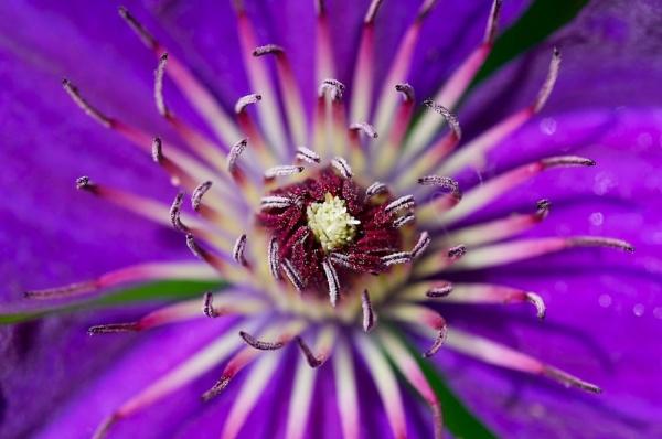 Purple by jamesh