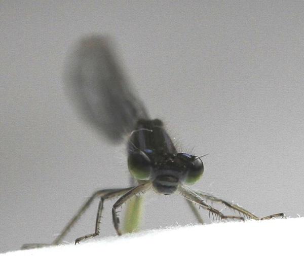 Bug Eye by SueSelley