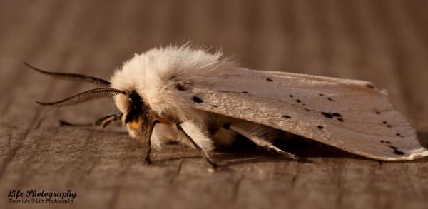 Moth by life_ts