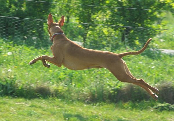 Lottie Leaping by annatefkah2