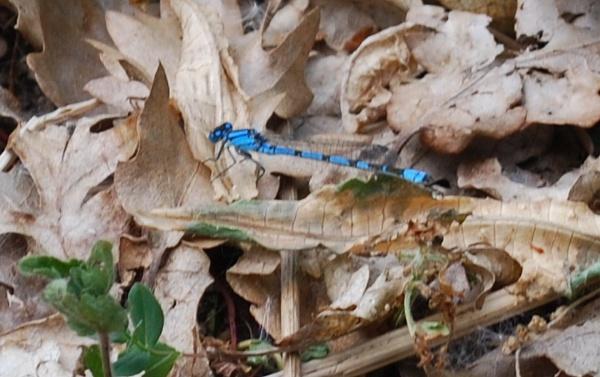 little dragonfly by toniiixx
