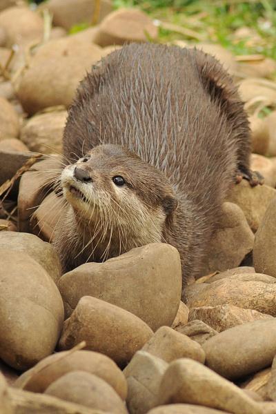 Otterly Brilliant by Richard_OSullivan