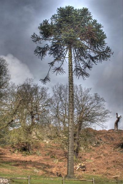 MP TREE by marktc