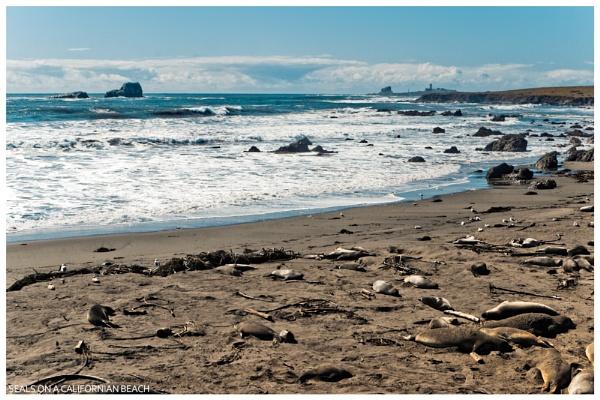 Seals on a Californian Beach. by havecamerawilltravel