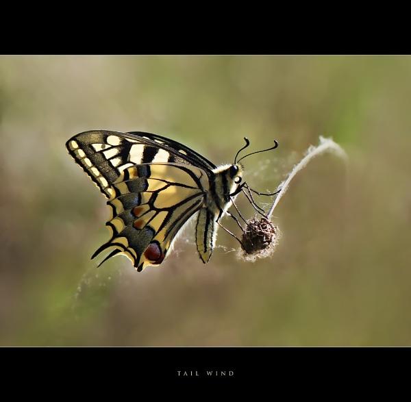 Tail Wind by celestun