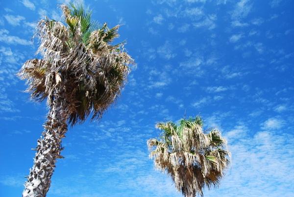 Mottled Summer Sky by renoops
