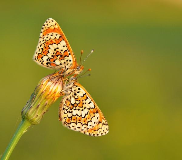 grat colour butterflys by ruurd