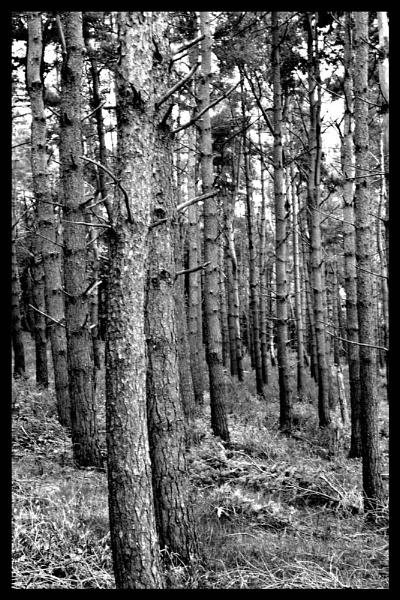 Fenton Hill Crag by sjcree