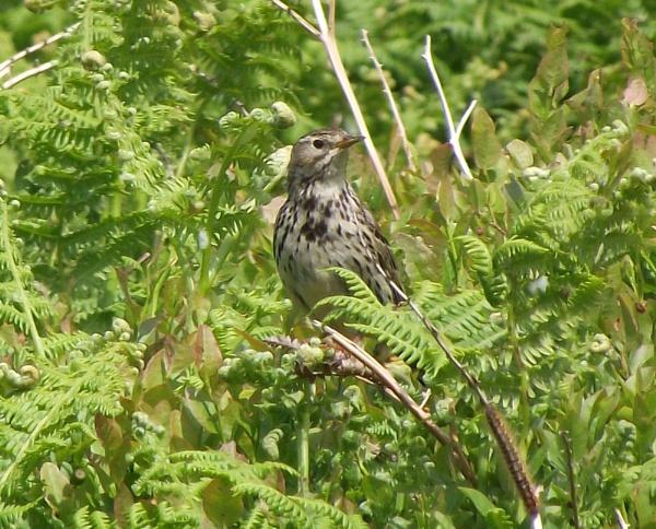 Mr Bird by alanbbad