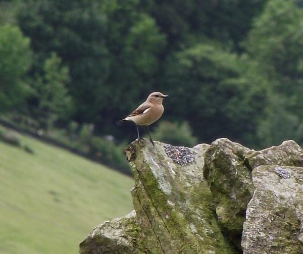Mrs Bird by alanbbad