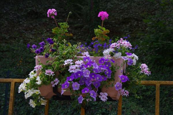 blossoming railings by senn