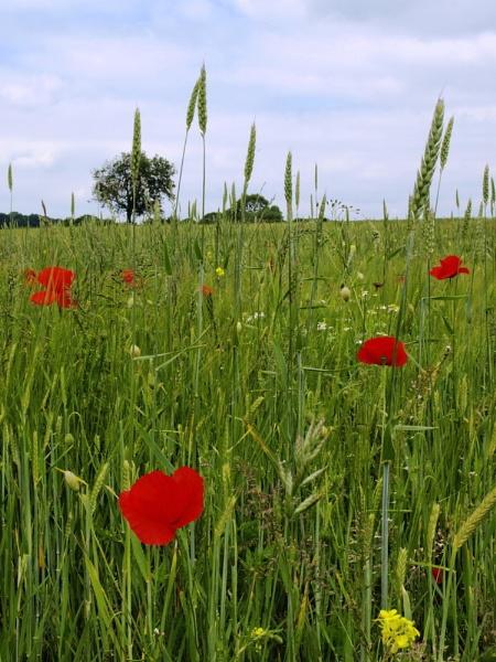 Summer Meadow by Alandyv8