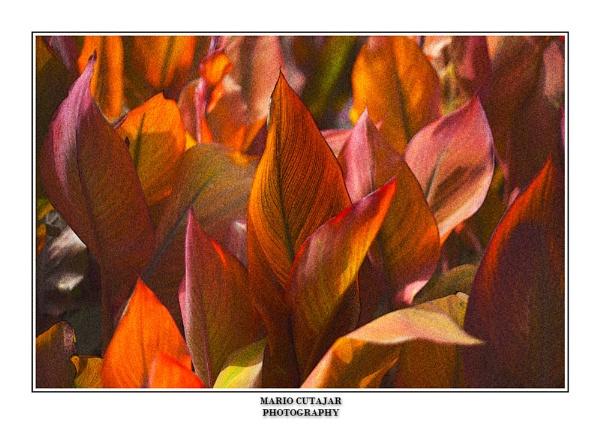 Color nature harmony by farfett2001