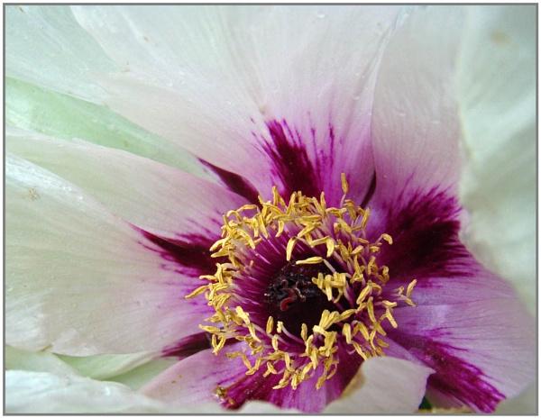 Hardwick Flowers by nigele1