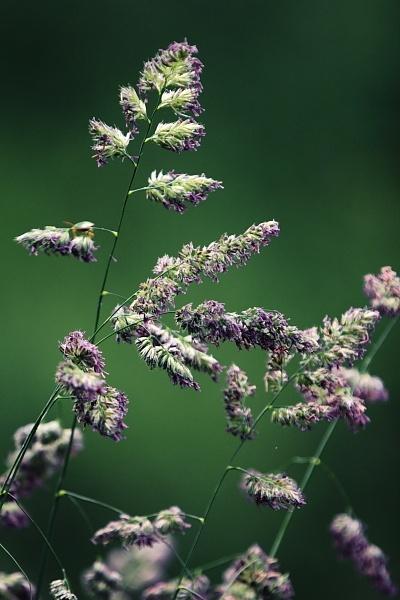 Grass by steve5452