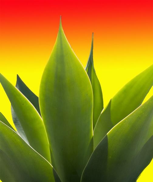 Succulent by gajewski