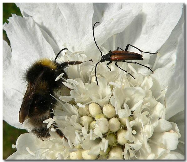 bee n beetle by bunbeam