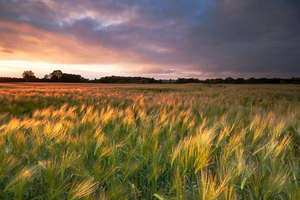 fields of gold by Slaterm