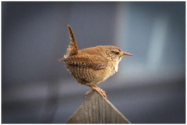 Garden Visitor 1 by neill5409