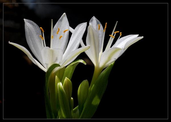Morning White by samarmishra