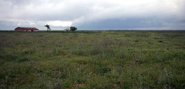 Prairie by nonur