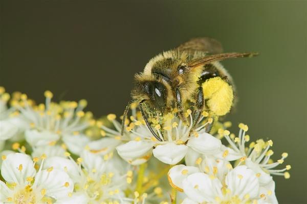 Busy Bee by Gemma9