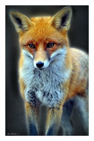 ruby by photoflacky